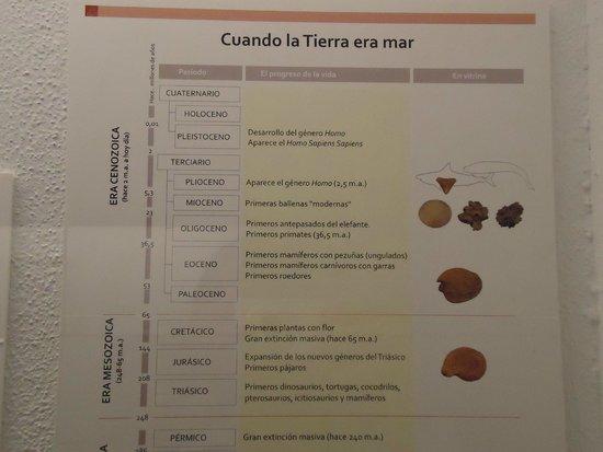 Museo Arqueológico de Sevilla: Muy buenas explicaciones.