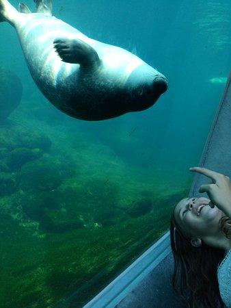 Nordsoen Oceanarium : Säl på oceanarium