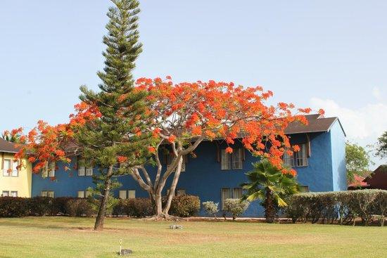 Club Med Turkoise, Turks & Caicos : Beautiful, lush grounds