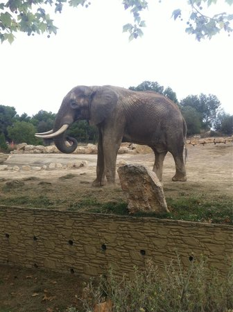 Réserve Africaine de Sigean : Un des éléphants qui prenait son déjeuner devant nous.