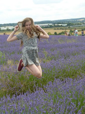 Hitchin Lavender: beautiful setting