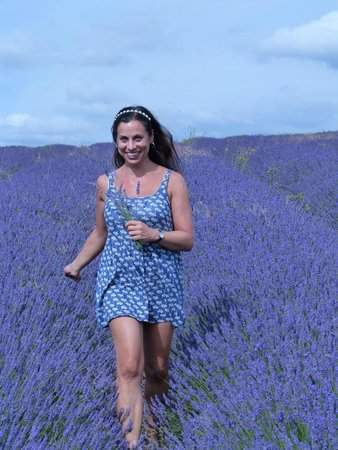 Hitchin Lavender: lavender all around