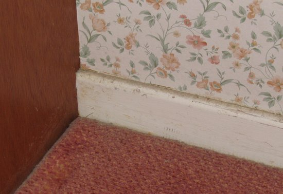 The Lion Hotel: Dust on the skirting board