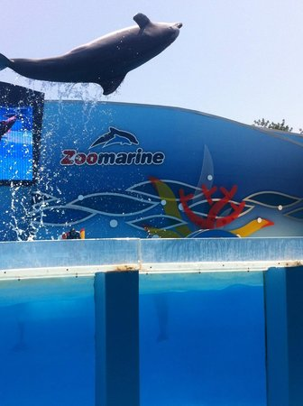 Zoomarine Algarve: Dolphin back flip at Zoo Marine - sit where we did, and you get splashed!
