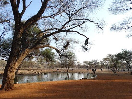 Omaruru Game Lodge: Il waterhole davanti al Lodge