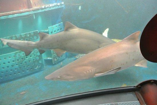 Grand Aquarium : 7