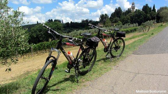 Tuscany Bike Tours: Bike na Toscana