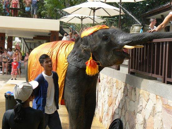 Impiana Resort Chaweng Noi : Сонгкран