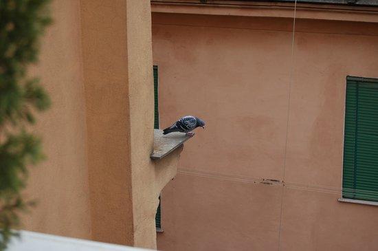 Hotel Lazzari: голуби часто прилетают в гости на балкон