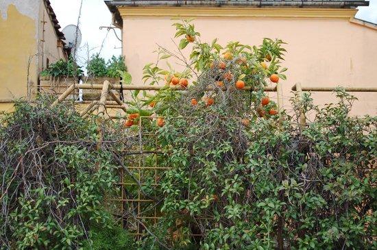 Hotel Lazzari: мандариновое дерево на балконе дома напротив