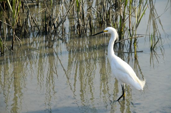 Huntington Beach State Park: it's nice seeing the birds, tiny crabs, etc. at the marshes