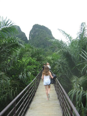 Wooden Walkway Above The Ground Picture Of Khao Sok Good View
