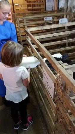 Blue Gate Garden Inn - Shipshewana Hotel : Farm Tour