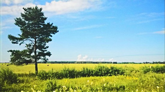 Saare County, Estonia: Countryside