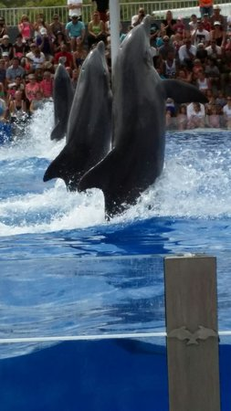 Marineland Mallorca: The dolphin show