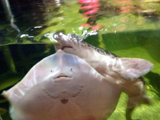 Ilfracombe Aquarium: Feeding time!