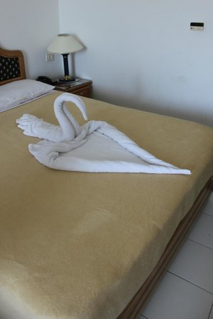 Desert Rose Resort : Лебедь