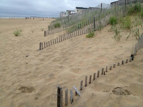 Sandbridge Beach: pretty dunes at beach