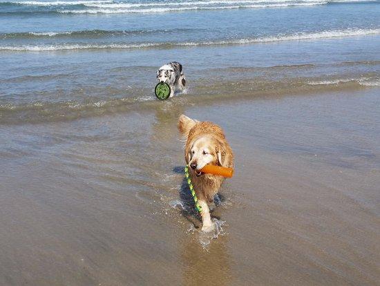 Ocean Villa Inn : All for the dog experience