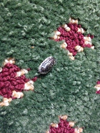 Travelodge Mount Pocono: dead bug