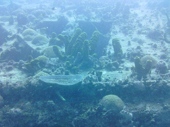 Sandals Ochi Beach Resort: Shipwreck 5