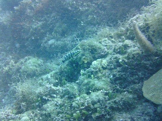 Sandals Ochi Beach Resort: Shipwreck 3
