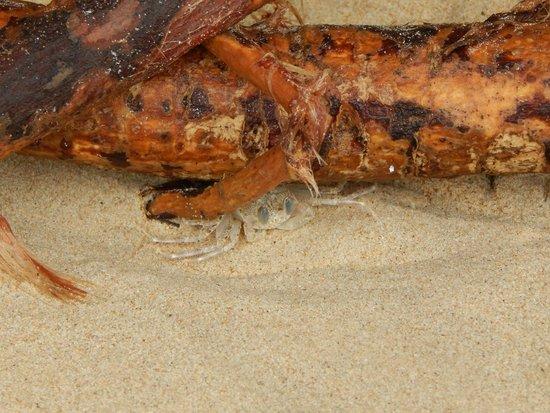 By The Sea: на пляже, песчаный краб