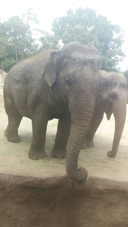 La Palmyre Zoo : Éléphants