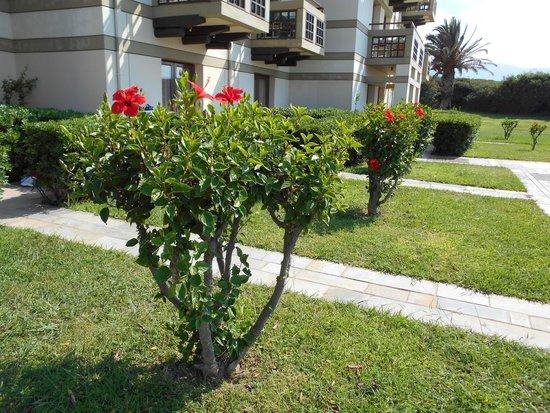Grecotel Meli Palace: Такие цветущие кусты там растут везде