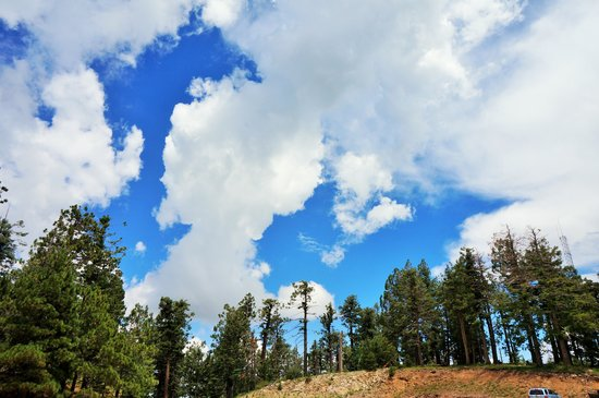 Mt. Lemmon Scenic Byway : Blue Sky, White cloud, green trees and colorful flowers