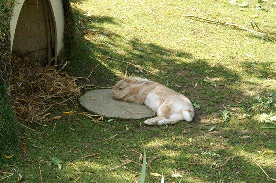 Drusillas Park: Thumper lol