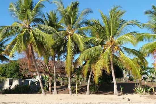 Corail Noir : Palme sulla spiaggia