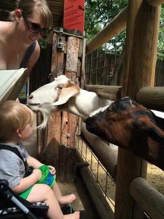 Zoo Boise: Feeding the very friendly goats