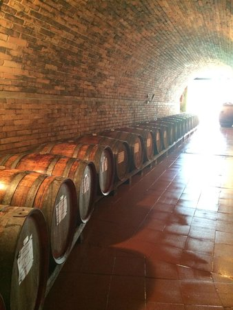 Cooltours - Day Tour: Chianti Classico Wine Tour