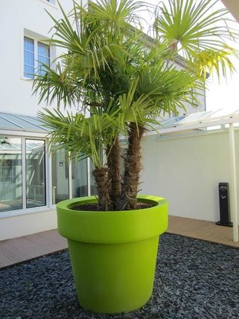Ibis Styles Saumur Gare Centre: large tropical tree in courtyard planter