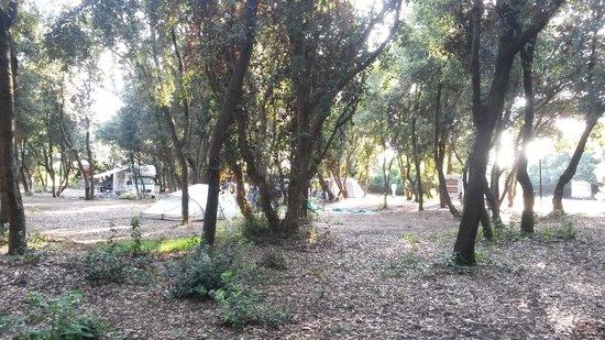 Village Parco della Gallinara: Camper Areal