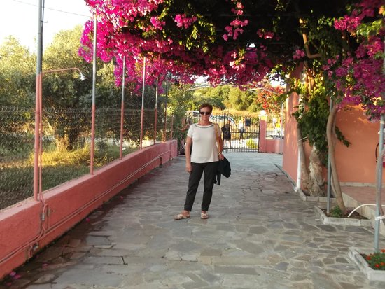 Studios Paradise - Svoronata Cephalonia: L'ingresso del Paradise.