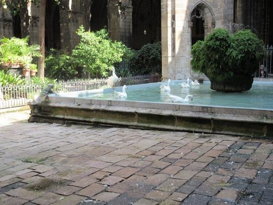 Barcelona Cathedral : the geese
