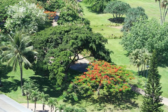Luana Waikiki Hotel & Suites: View of park from room