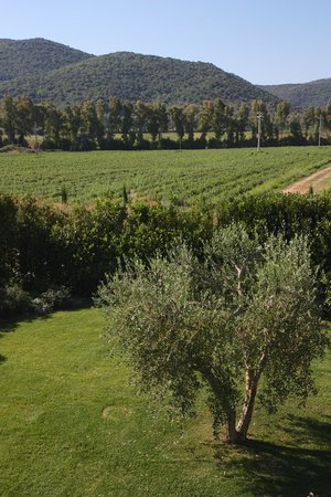 Podere Del Priorato: View from the room