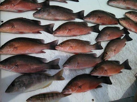 Paradise Charters : 22 Keepers in 4 hours with a limit on snapper