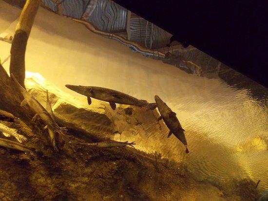 Georgia Aquarium : Above and beyond us