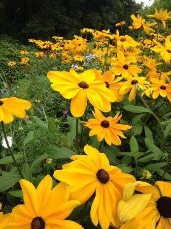 Jardin Public de Saint-Omer : Lovely flower beds