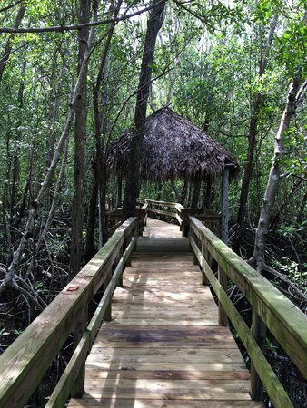 Jungle Erv's Everglades Airboat Tours: Nice boardwalk outback that was filled with mosquito's and crabs that were all over the trees!