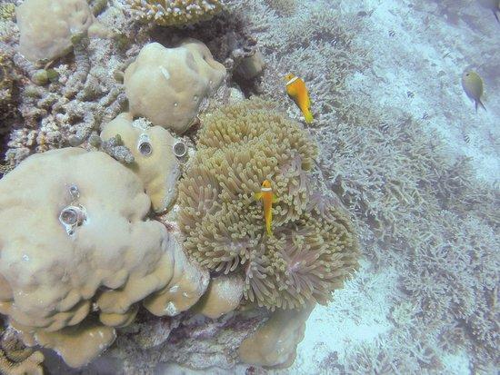Euro Divers : Anemone