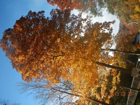 Cherokee / Great Smokies KOA: Trees during fall