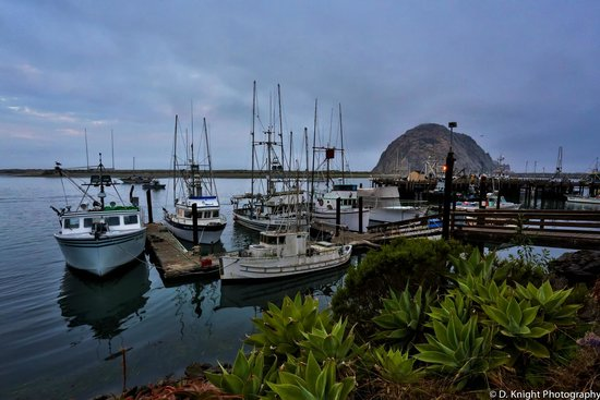 Bayfront Inn : Marina across the street