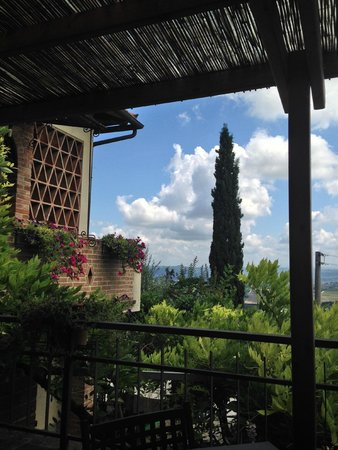 My Tuscan Wine And Tours: In the garden