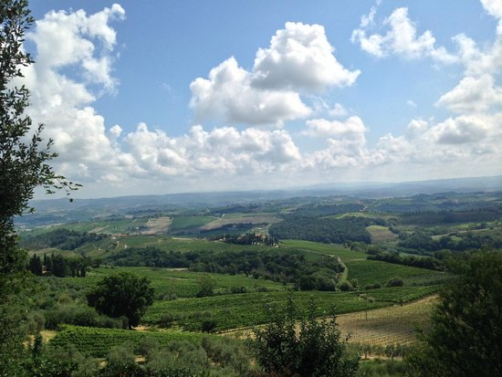 My Tuscan Wine And Tours: View from Marialuisa's vineyard