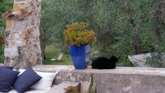 te benijden: het leven van Seal in La Parare